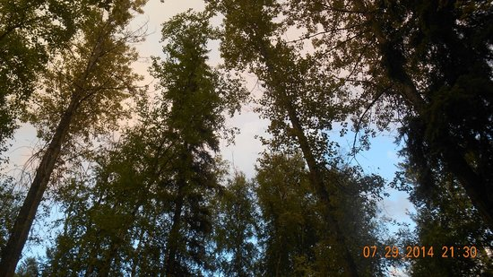 Canyon RV Resort: Trees!