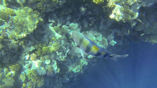 Sharm Grand Plaza : Частичка прекрасного подводного мира Красного моря.