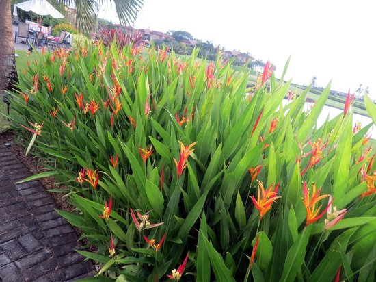 Los Suenos Resort and Marina : Flowers
