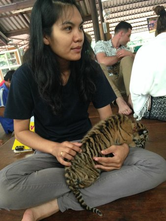 Tiger Temple Thailand Tour : baby