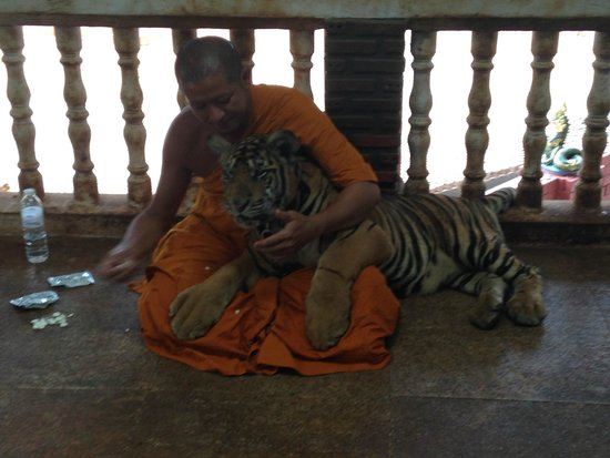 Tiger Temple Thailand Tour : monk and toddler