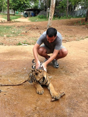 Tiger Temple Thailand Tour : toddler