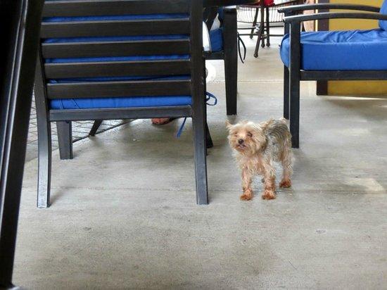 Los Suenos Marriott Ocean & Golf Resort: Puppy