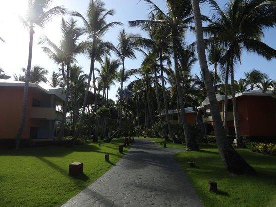 Iberostar Punta Cana: Bello el entorno!!!