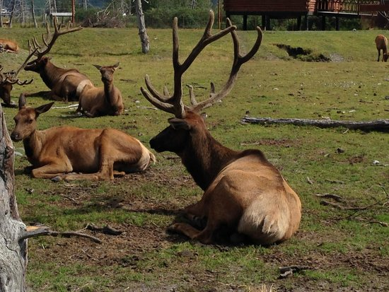 Alaskan Fishing Adventures Accommodation : Stop at the Alaska Wildlife Conservation Center on your way to or from Anchorage