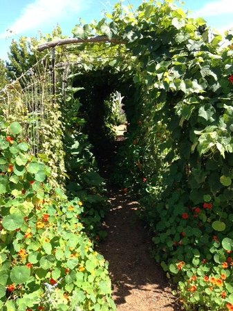 Freestone, Califórnia: Wild Flower Bread garden (its free!)