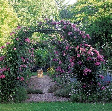 High Hopes of Greyton : Lovely rose bower walk in the gardens