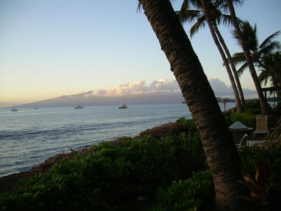 Makai Inn: Palm trees with Molokai in the back ground.