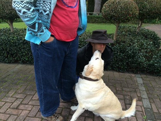 Wilderness Manor Guest House : sons enjoying well behaved dog!