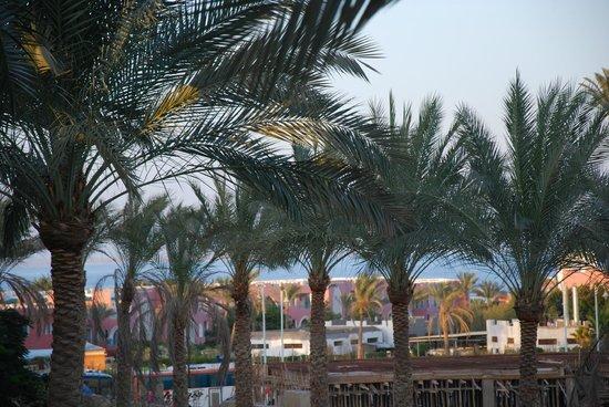 Tropicana Azure Club: Widok z pokoju - Sharm el Sheikh
