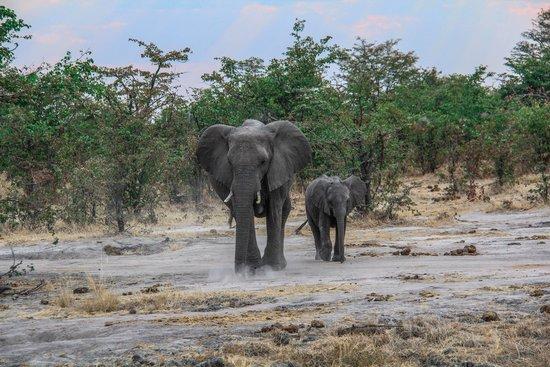 Belmond Khwai River Lodge: Elephants
