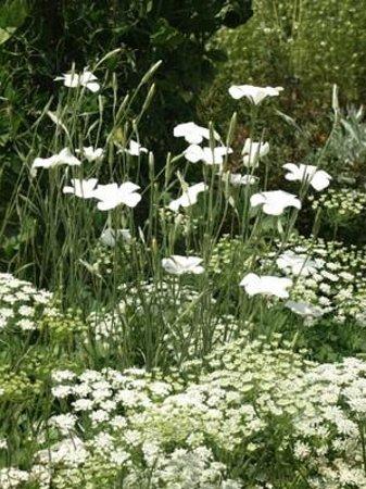 Sissinghurst Castle Garden A Planting In The White