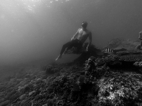 Blue Immersion Freediving: Jimmy diving!