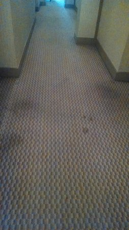 Marriott Vacation Club Pulse, South Beach: Stained carpet 3rd on floor