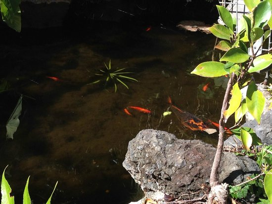 Hotel Puerto de la Cruz: fishes near pool bar