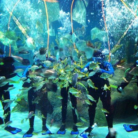 Coral Reef Encounter Picture Of Florida Keys Aquarium