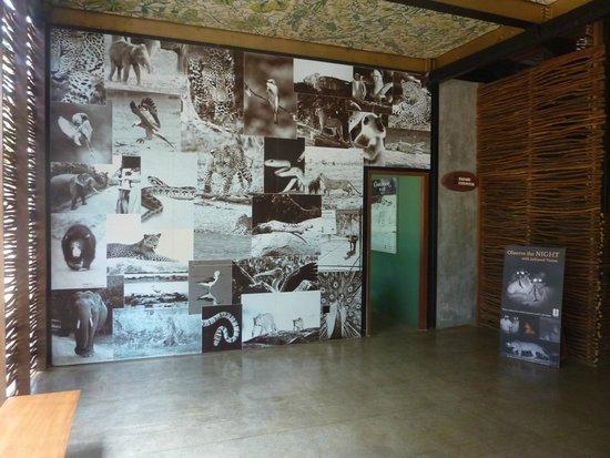 Cinnamon Wild Yala: Collage