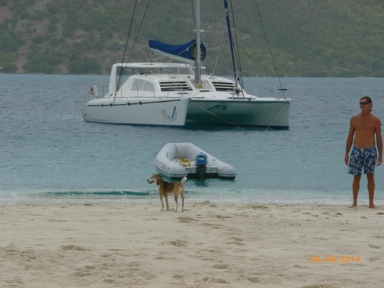 Singing Dog Sailing: Gorgeous Boat