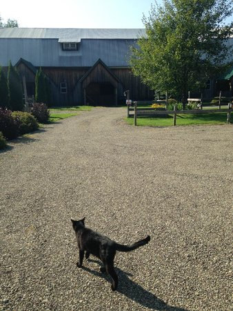 Great Tree Inn Bed & Breakfast: Off to the barn with Herman the barn cat tour guide