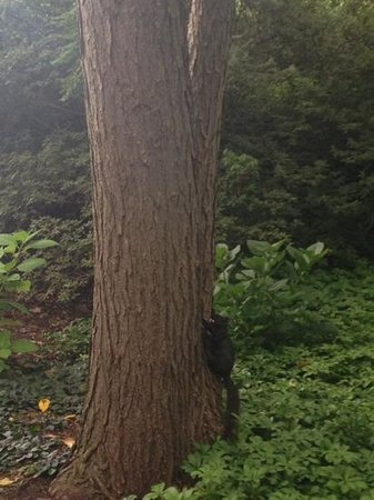 Hillwood Museum & Gardens: black squirrel