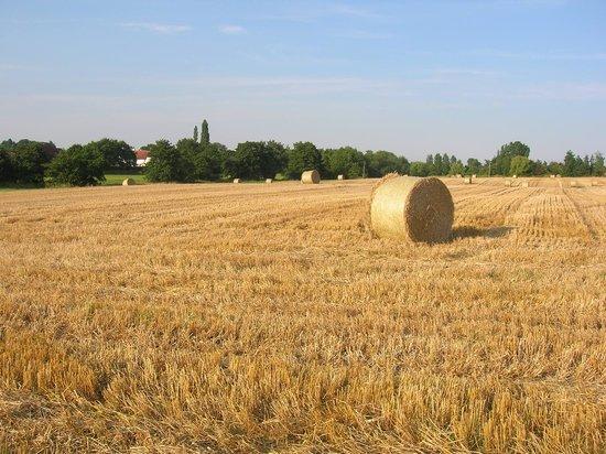 Sisland Tithe Barn: across the fields from Owl Barn