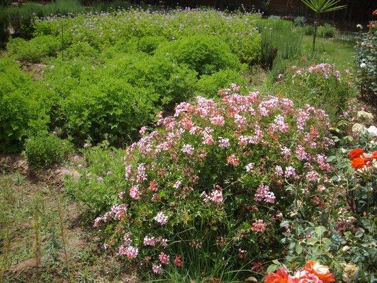 Gardens Picture Of Jardin Bio Aromatique Nectarome Marrakech