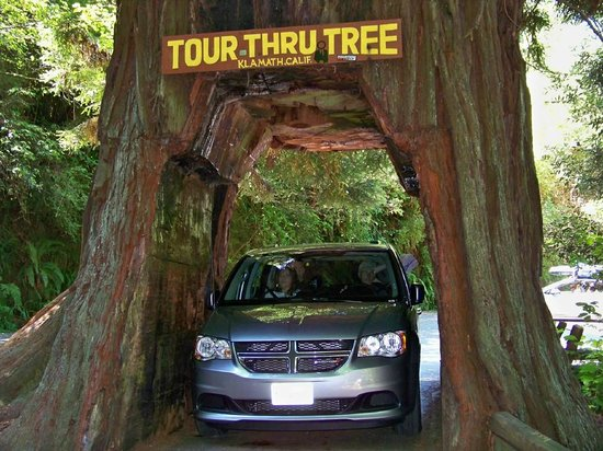 Tour-Through Tree : Our van going through tree
