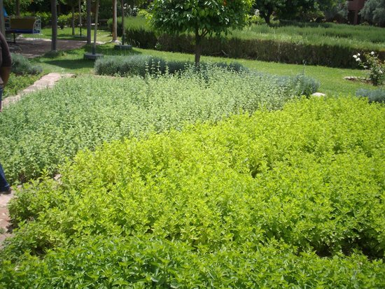 Gardens picture of jardin bio aromatique nectarome for Jardin aromatique