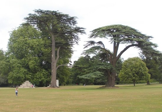 Wilton House: Such beautiful trees.