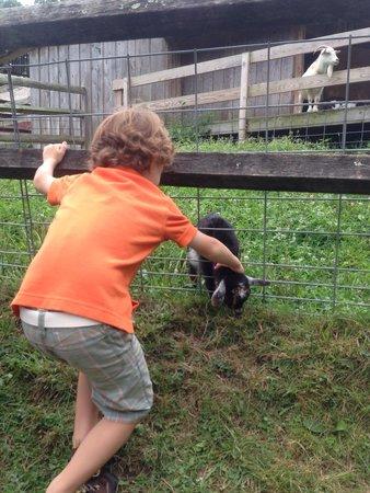 Stamford Museum & Nature Center : Baby goat