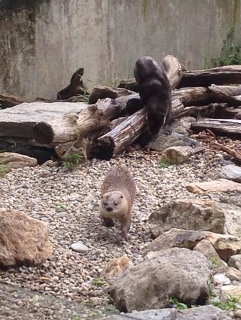 Stamford Museum & Nature Center : Otters