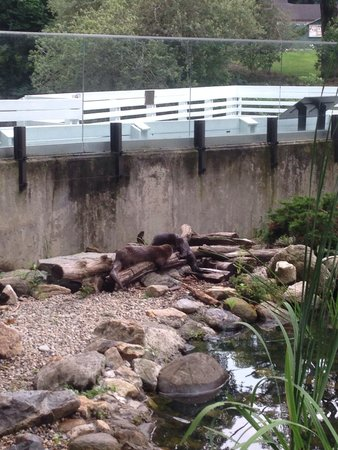 Stamford Museum & Nature Center: Otters
