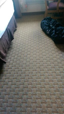 Best Western By Mammoth Hot Springs : Carpet very new and clean