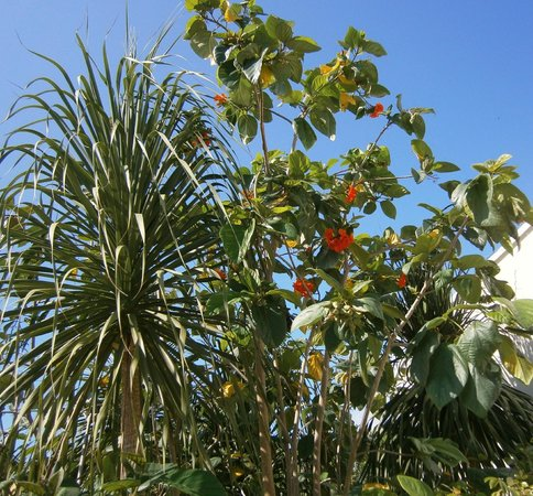 Grand Sirenis Riviera Maya Resort & Spa: The grounds were kept beautiful