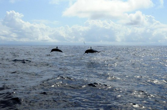 Tranquilo Lodge : Traveling Dolphins