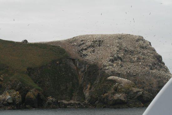 """Armor Navigation : la prima isola con la colonia di """"Matti di Bassan"""""""