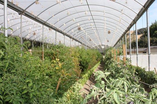 Linn's Fruit Bin Farmstore: tomatoes