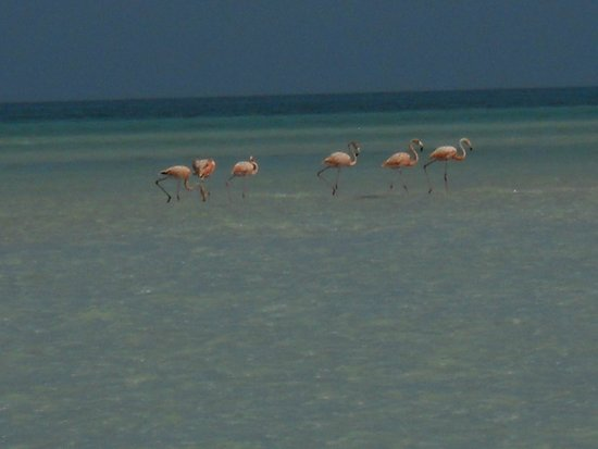 Holbox Dream Hotel by Xperience Hotels: Flamingo's
