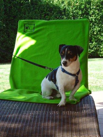 Santa Maria a Poneta : auch mein Hund hat Urlaub