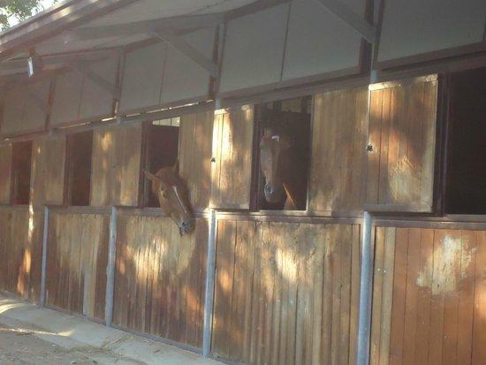 Santa Maria a Poneta: Pferdestall