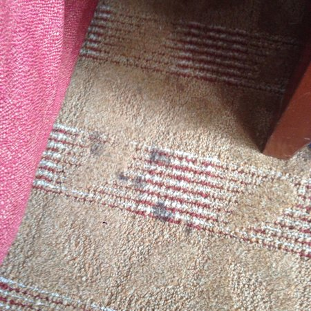 Homewood Suites Dayton-Fairborn (Wright Patterson) : I don't even want to think about what these stains on the carpet - next to the bed - are.   Room