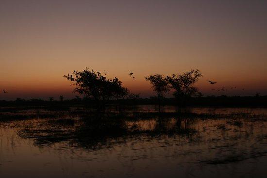 Chobe River Camp: Passeio de barco
