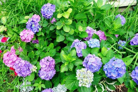 Martha's Vineyard Camp meeting Association (MVCMA) : Flowers