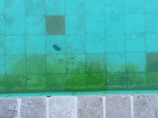 Logge Del Perugino W&B Resort : Bella piscina con muschio. Curata bene non c'è che dire !! Evidente che non c'è neanche il cloro