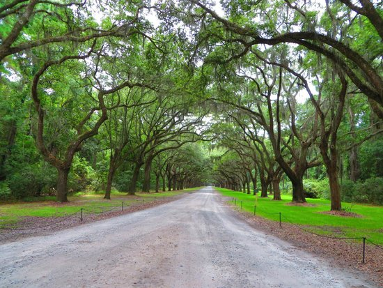 Wormsloe Historic Site: Great visit