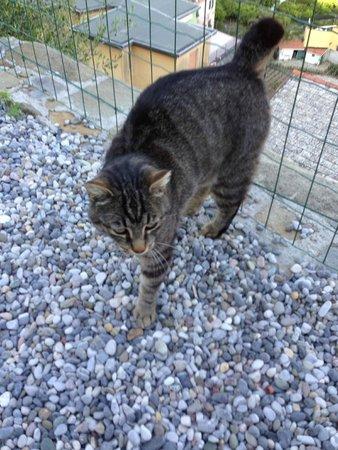 Hotel Villa Steno: Cute kitty on the terrace