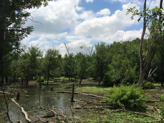 Heard Natural Science Museum & Wildlife Sanctuary: Wetlands