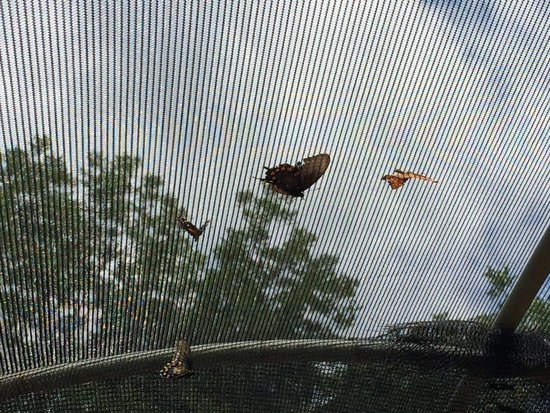 Heard Natural Science Museum & Wildlife Sanctuary : Butterfly habitat.