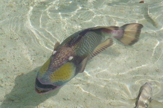 Pension Bounty : El agua es tan transparente que parece un acuario