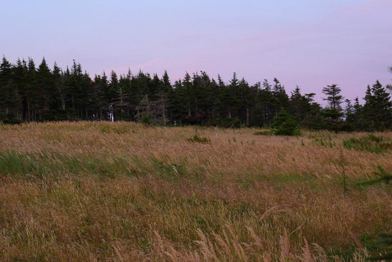 Skyline Trail: Look carefully...there's a moose!